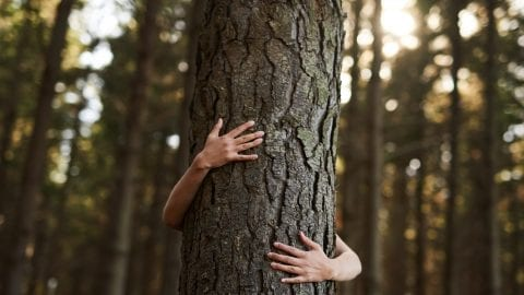 tree-hugger-GenesisCare